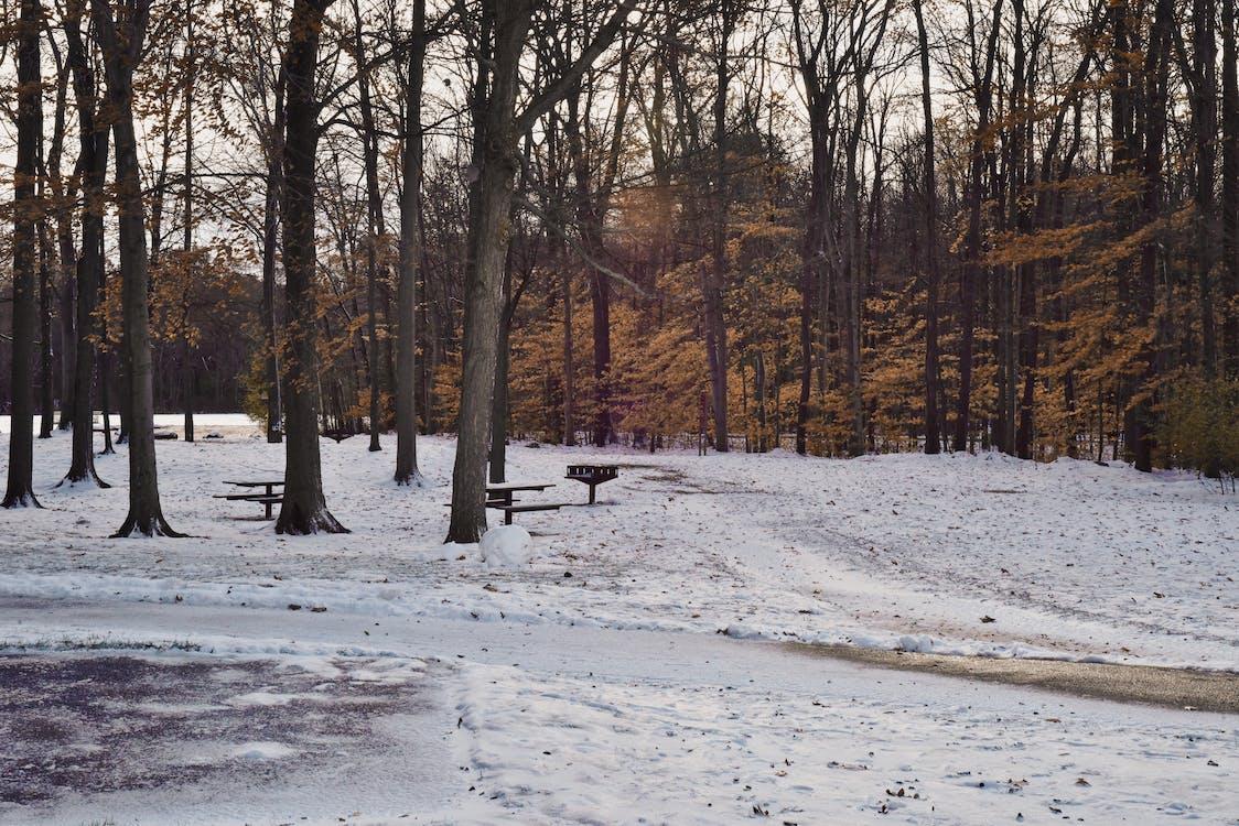 drzewa, krajobraz, las