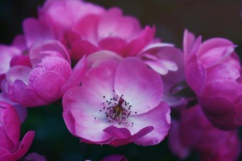 4k 바탕화면, HD 바탕화면, 꽃, 꽃 바탕화면의 무료 스톡 사진