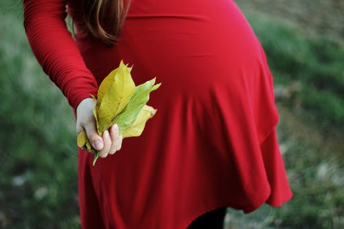 Selective Focus Photography of Pregnant Woman Holding Bundle of Leaves
