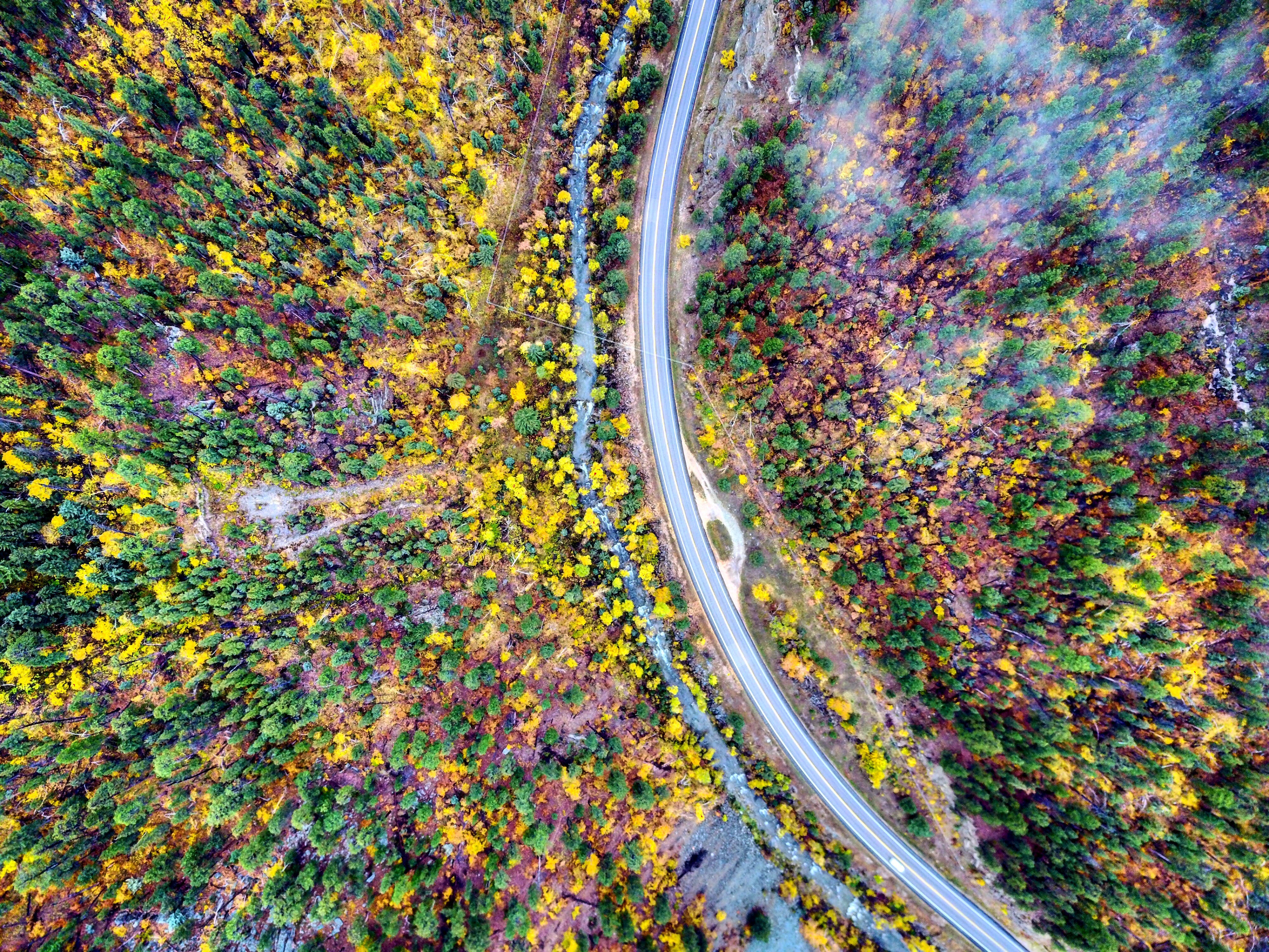 Top View Photo of Road Surrounded By Trees