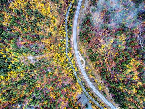 俯視圖, 季節, 巷道, 弧線 的 免费素材照片