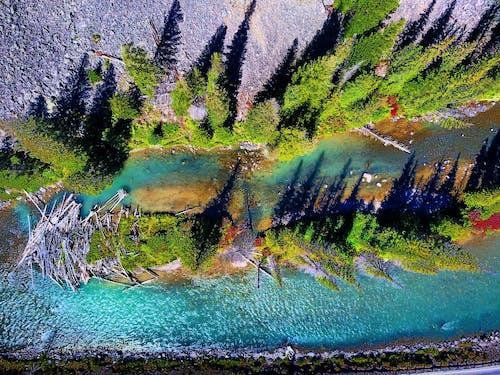 คลังภาพถ่ายฟรี ของ กลางวัน, ซุง, ต้นไม้, น้ำ