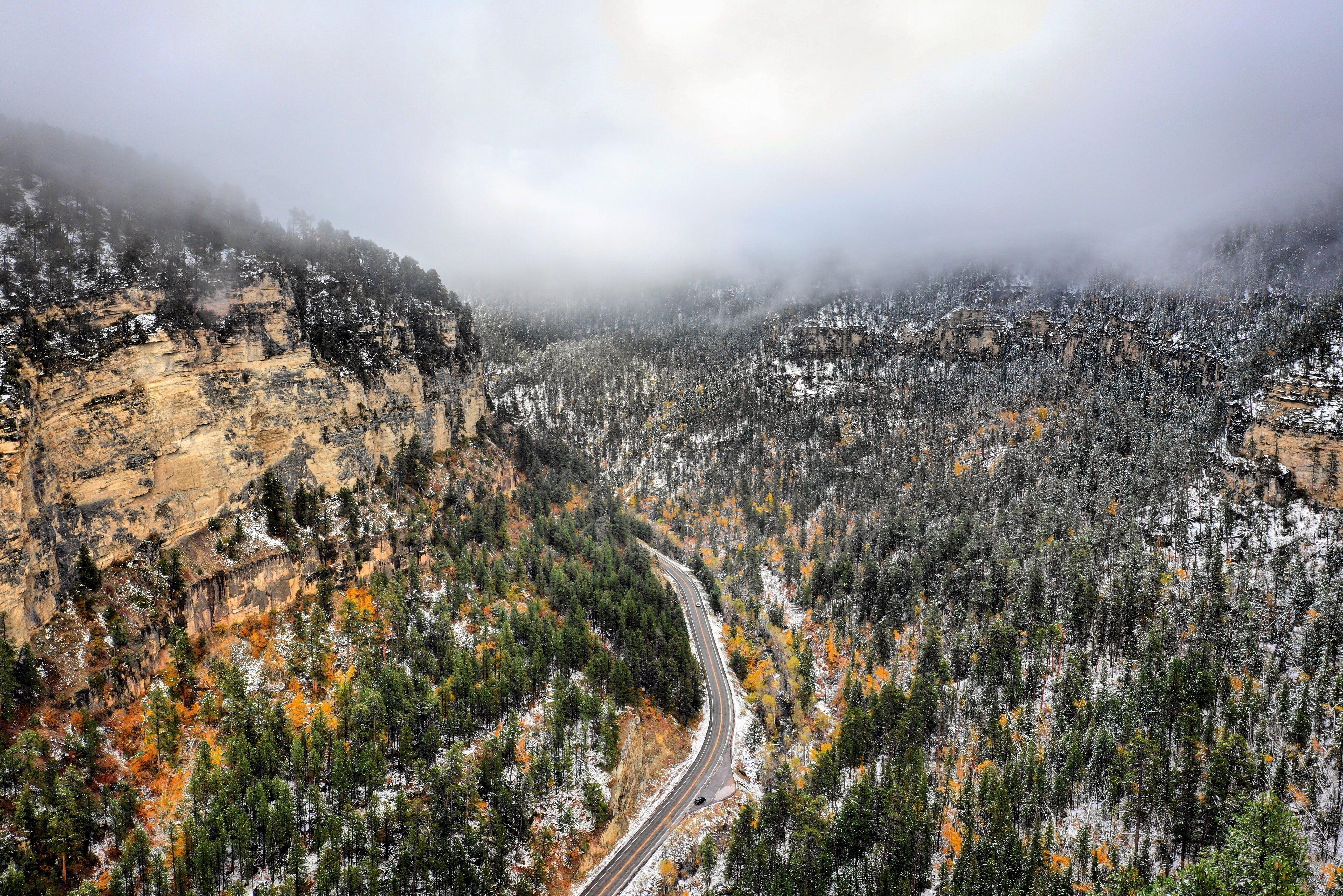 Grey Road Near Green-leafed Trees