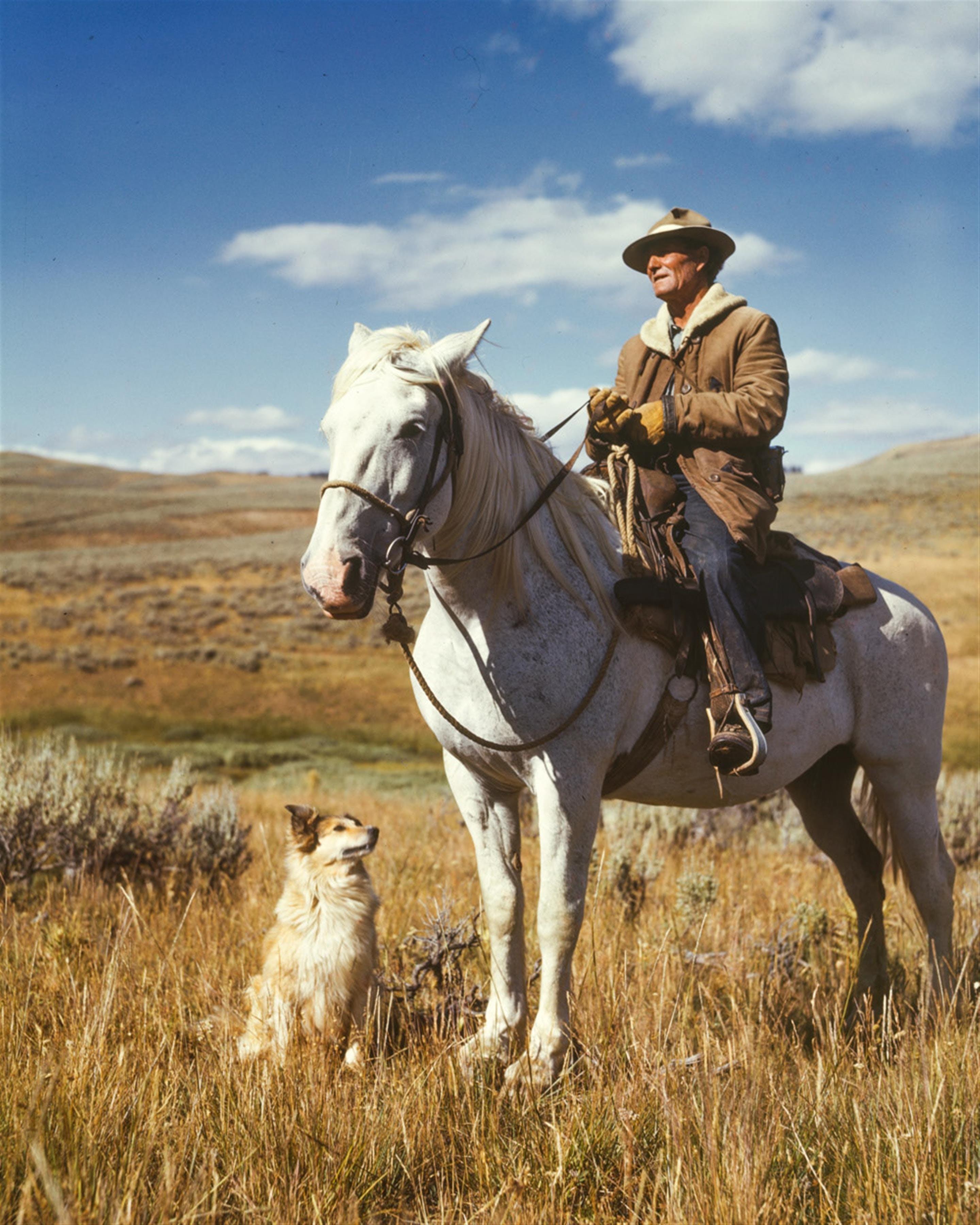 Man on White Horse Next to Dog on Grassy Field