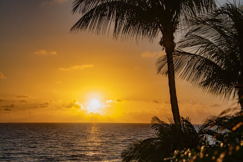 Free stock photo of palm tree, sunrise