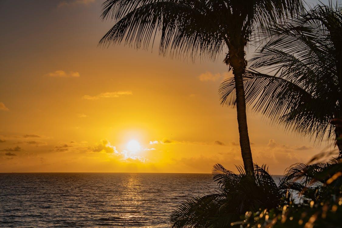 palm tree, sunrise