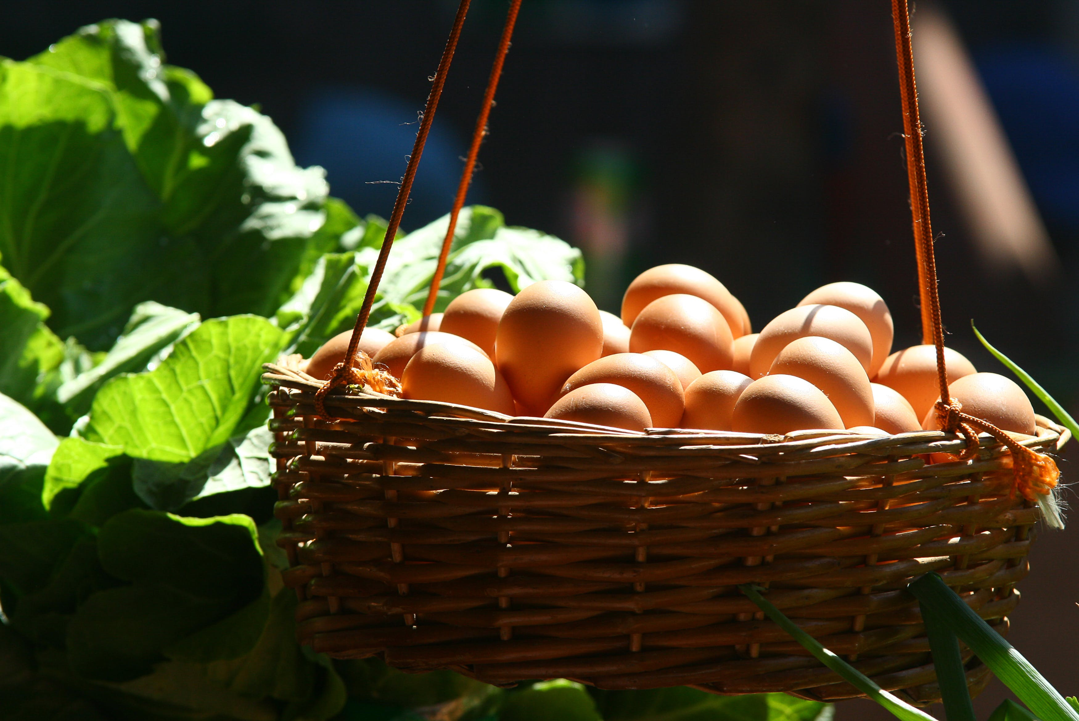 Basket Filled With Poultry Eggs