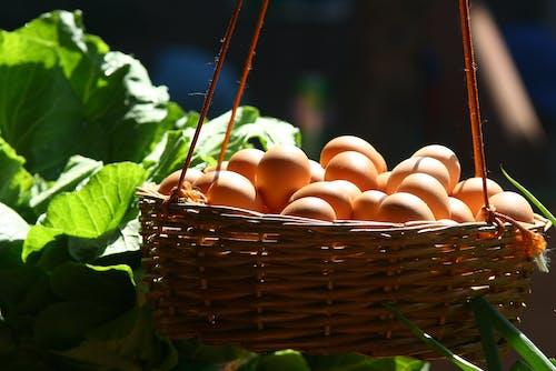 容器, 掛, 蛋, 貨櫃 的 免費圖庫相片