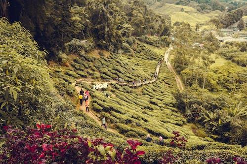 Δωρεάν στοκ φωτογραφιών με pahang, καμερούν υψηλά, Μαλαισία