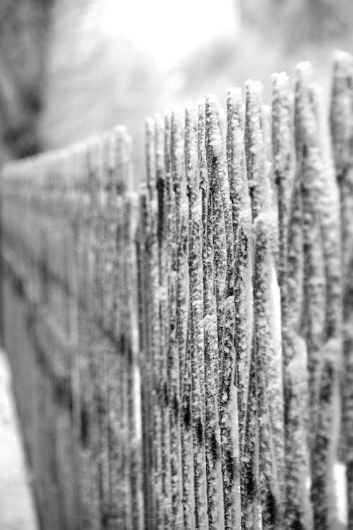 Foto d'estoc gratuïta de neu