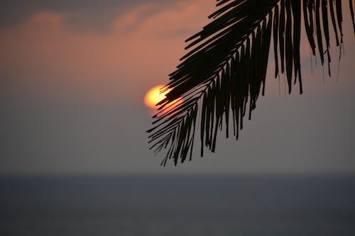 Foto d'estoc gratuïta de capvespre, goa, mar àrab, thalassa