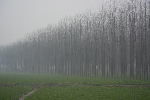 Foto d'estoc gratuïta de boira, hivern, Índia, punjab