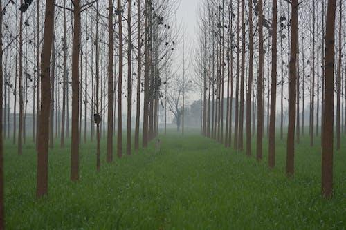 Foto d'estoc gratuïta de boira, granja, hivern, Índia