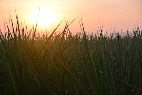 Foto d'estoc gratuïta de alba, granja, Índia, mumbai