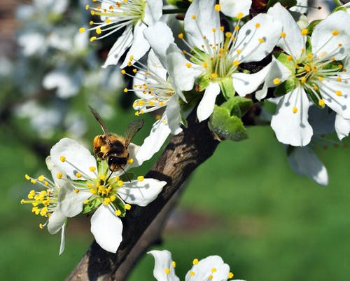 꽃, 꽃잎, 나무, 벌의 무료 스톡 사진