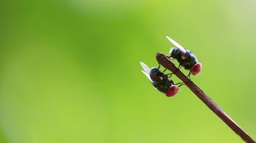 Fotos de stock gratuitas de mariposa, mosca de la grúa, mosca impresionante, mosca roja