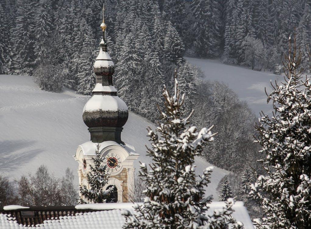 arbres, blanc, clocher d'église