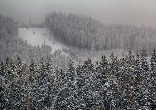 Foto stok gratis alam, dingin, hitam dan putih, hutan