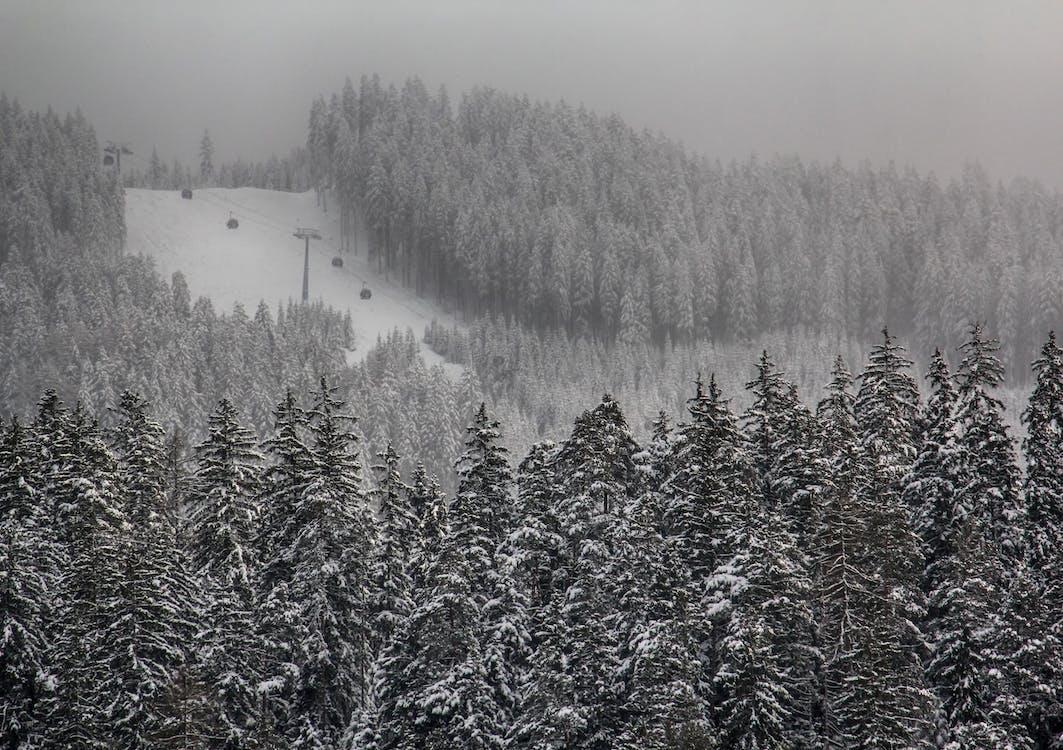 arboles, blanco y negro, bosque
