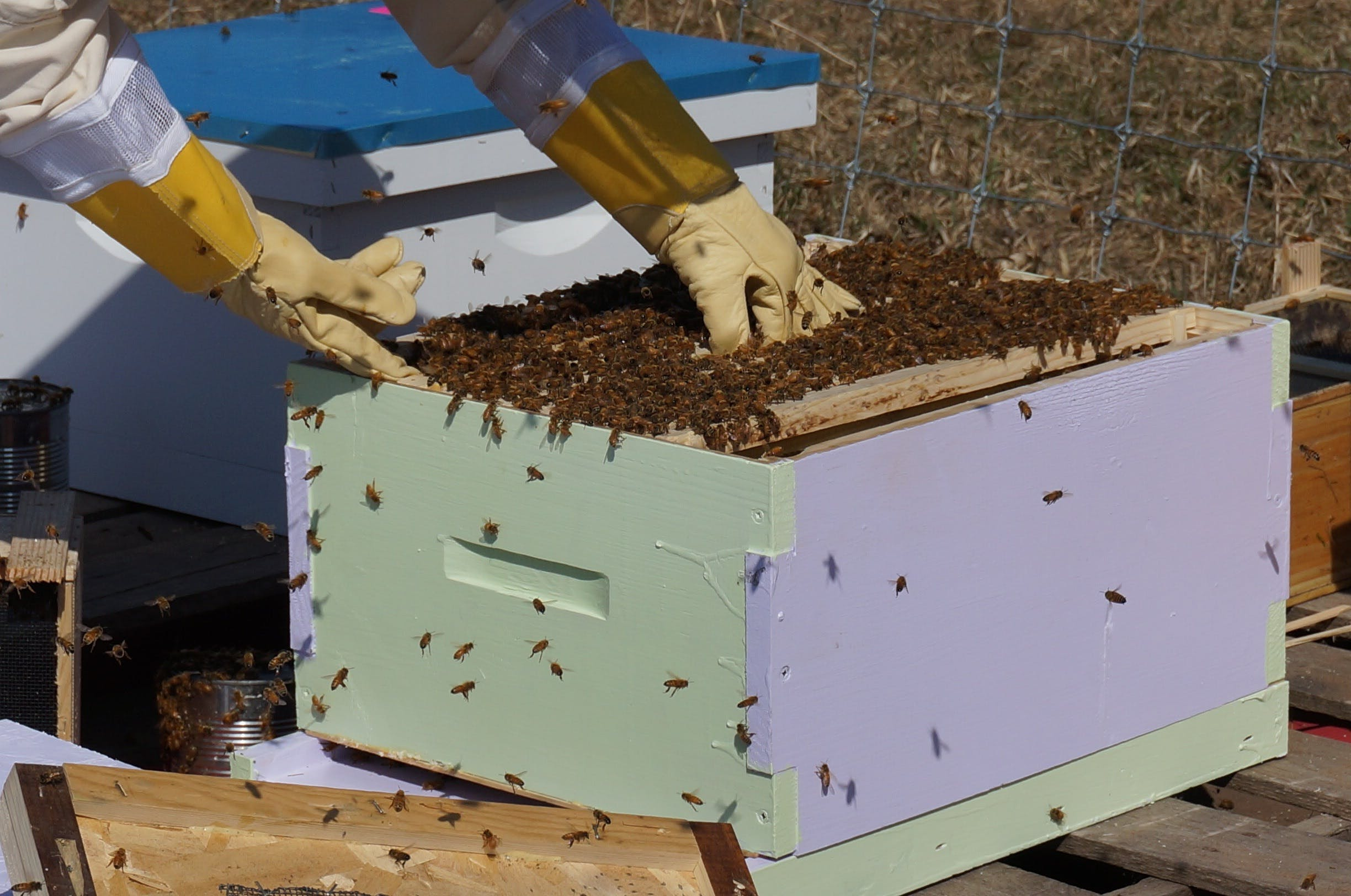 Free stock photo of agriculture, apiarist, apiary, beehive