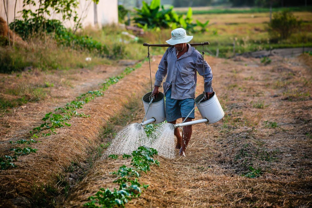 Farmer watering the plants | Photo: Pexels
