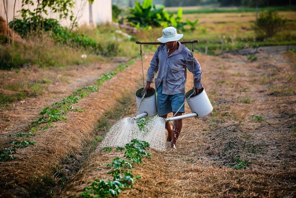 Farmer watering the plants   Photo: Pexels