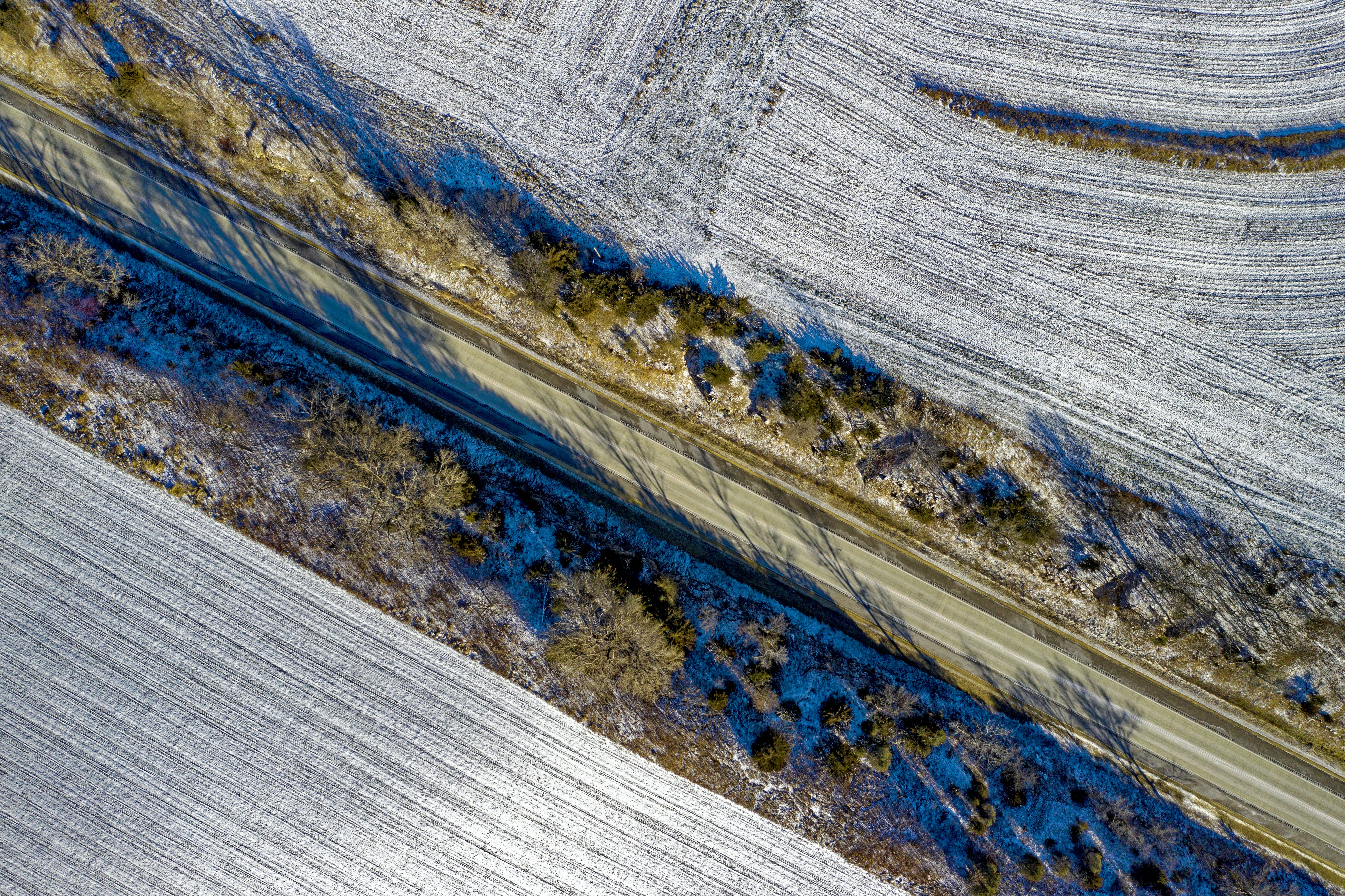 Drone Shot Of Blue Colored Trees