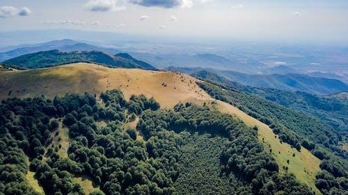 Fotos de stock gratuitas de aéreo, arboles, bosque, colina