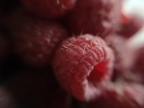 Gratis stockfoto met close-up view, frambozen, fruit, macro