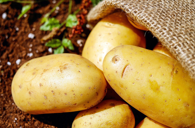 zu boden, ernte, gemüse, kartoffeln