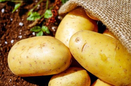 Základová fotografie zdarma na téma brambory, půda, sklizeň, zblízka