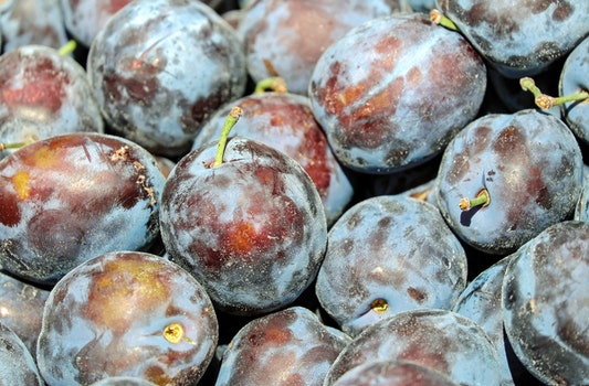 Free stock photo of healthy, fruit, delicious, plum