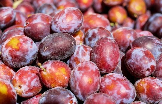 Free stock photo of fruits, harvest, fruit, plum