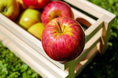 Fotobanka sbezplatnými fotkami na tému čerstvý, jablká, jedlo, makro