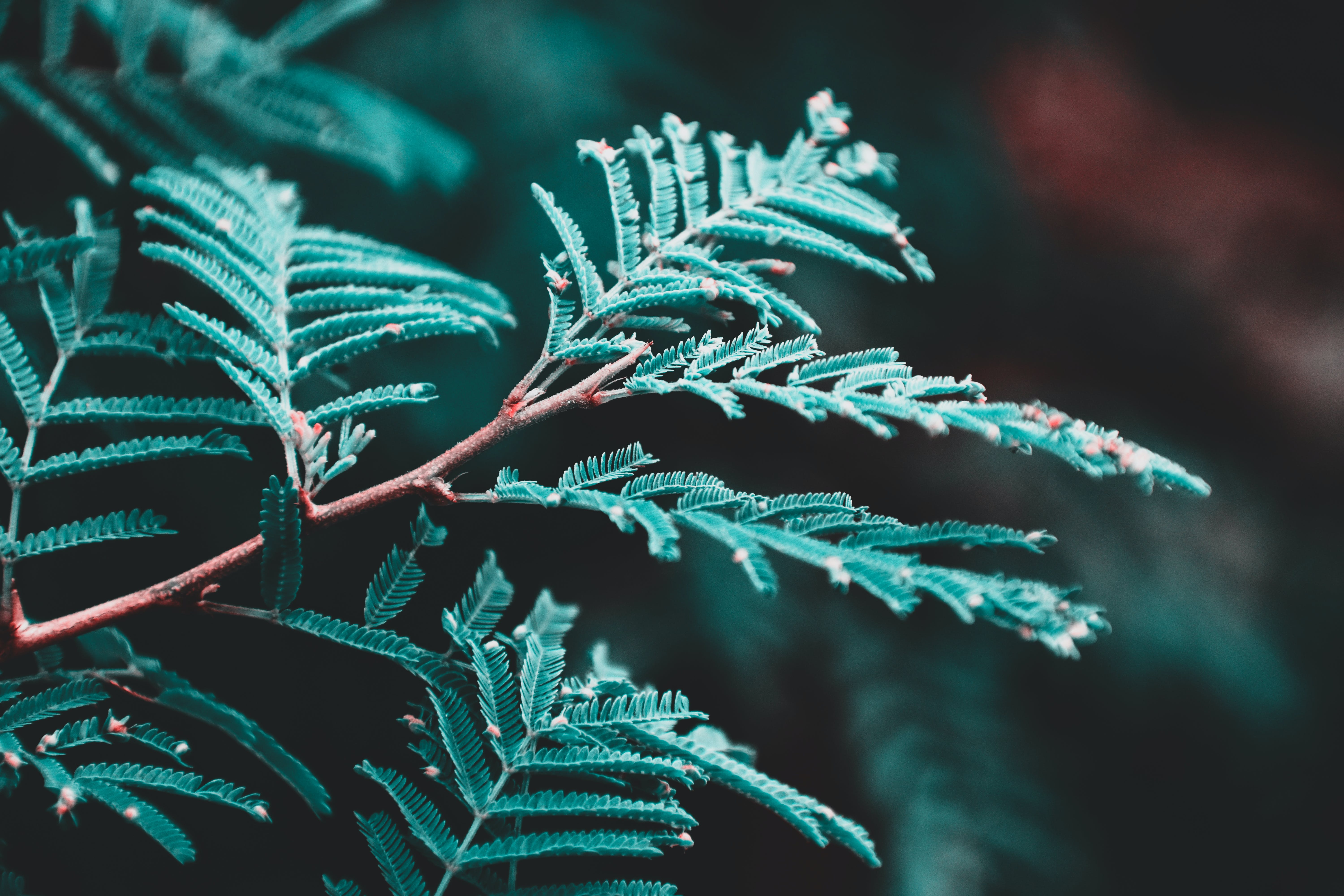 Closeup Photography of Green Leafed Plant