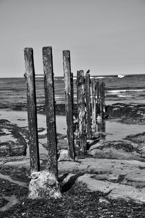 Free stock photo of b&w, coast, coast line