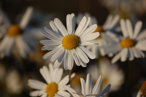 Fotos de stock gratuitas de amarillo, flor