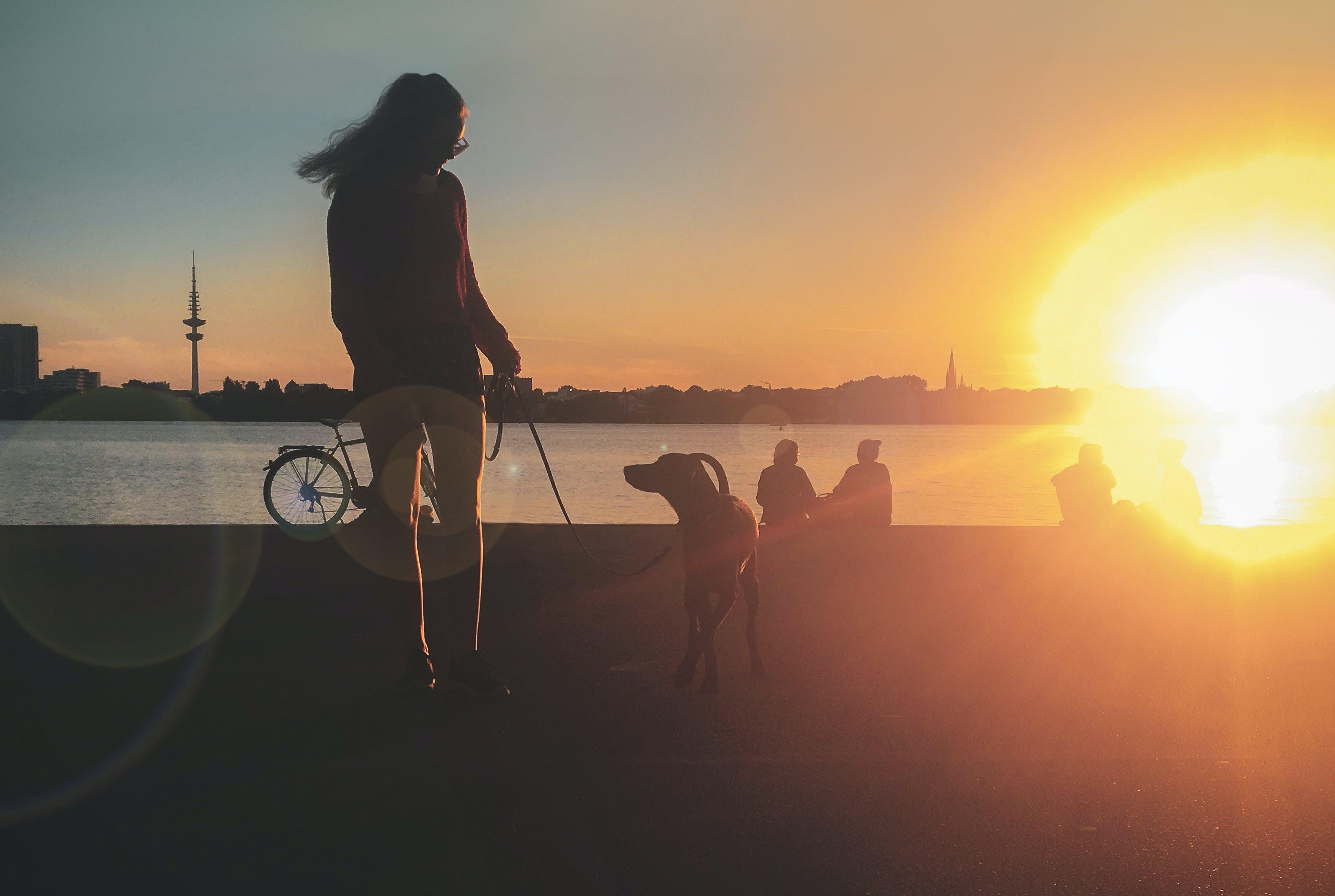 Gratis lagerfoto af blondine, Hamborg, hund, kvinde