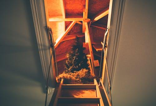 Immagine gratuita di albero, albero di natale, attico, decorazione natalizia