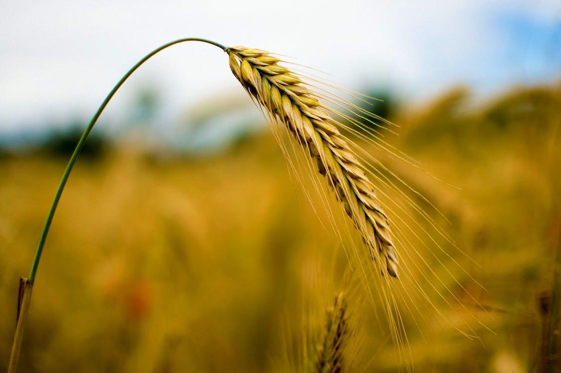 заводы, максросъемка, пшеница