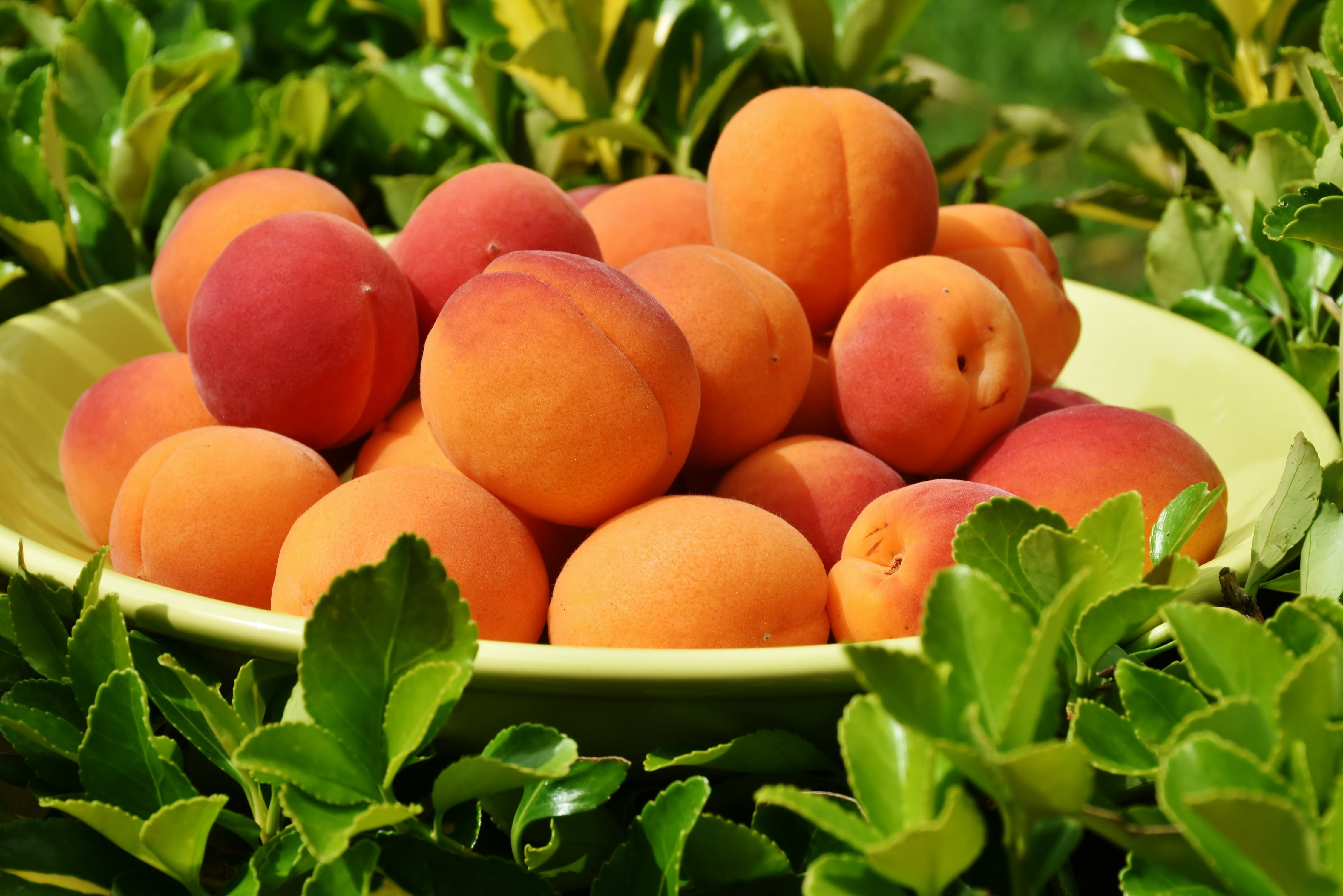 Free stock photo of food, healthy, agriculture, fruits