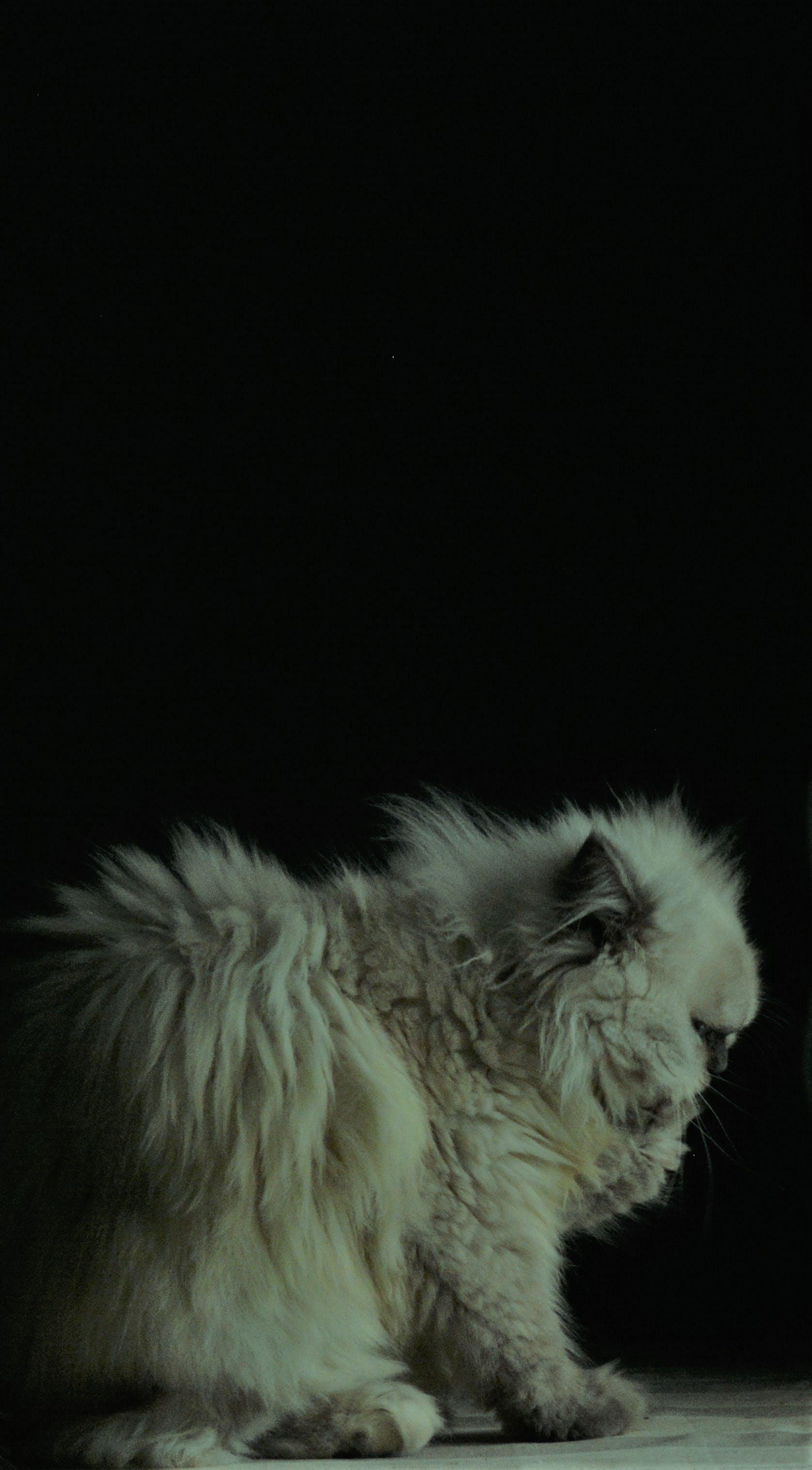Free stock photo of background, cat, in dark
