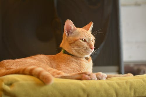 Orange Cat on Top of Yellow Textile