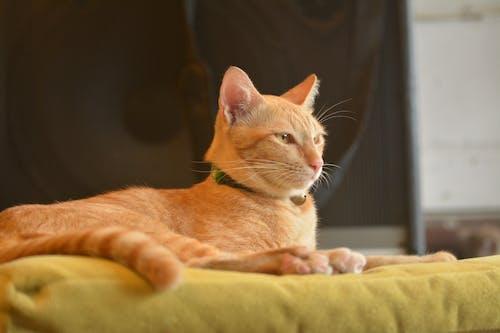 Foto stok gratis anak kucing, belum tua, berbayang, berbulu