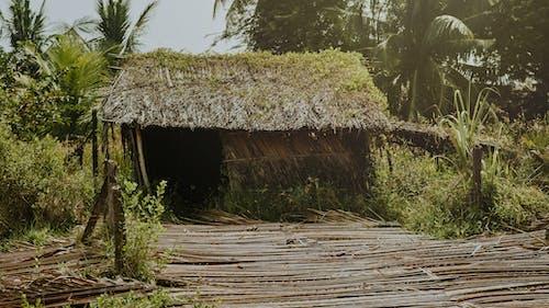 คลังภาพถ่ายฟรี ของ กระท่อม, ต้นไม้, ทำด้วยไม้, นา