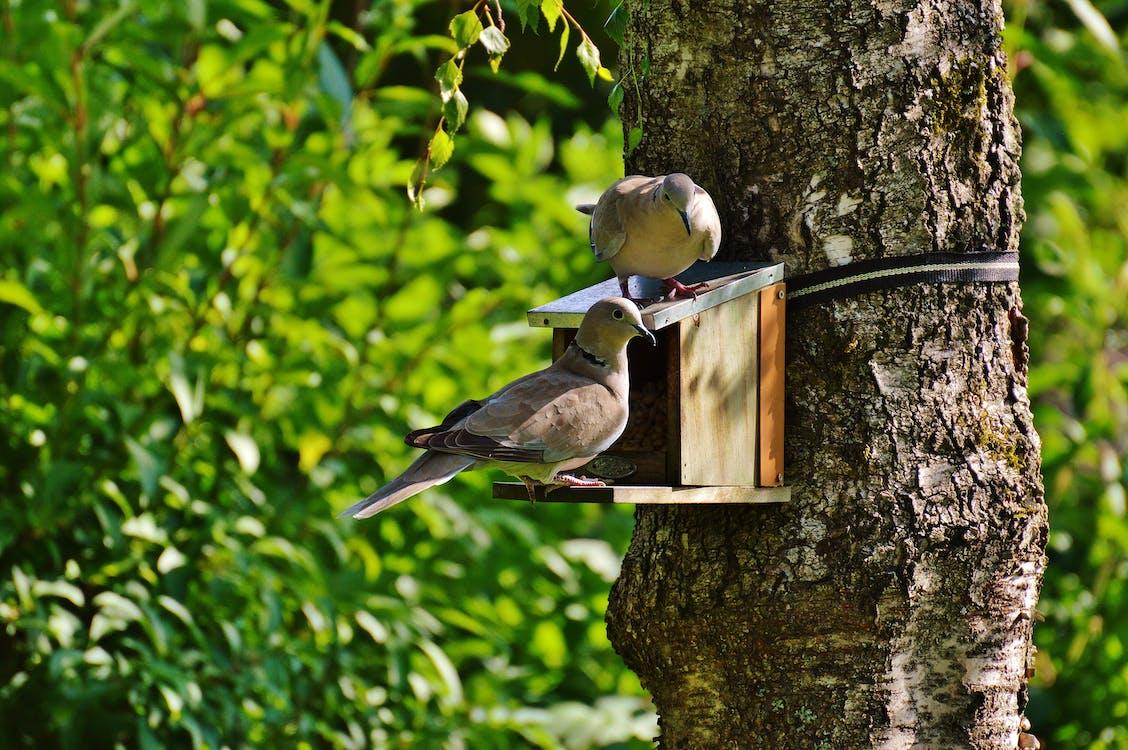 깃털, 나무, 동물
