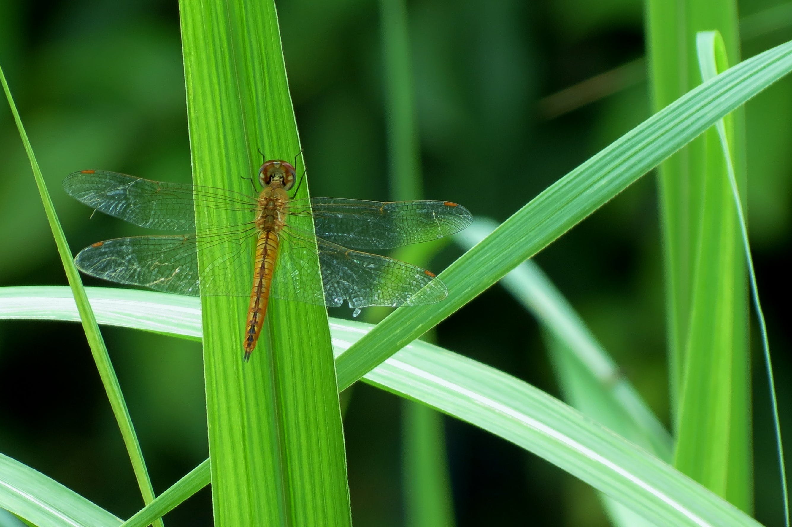 Shallow Focus Photography of Brown Dragonfly