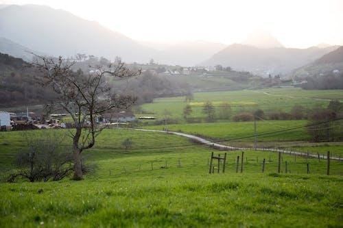 경치, 녹색 배경, 산의 무료 스톡 사진