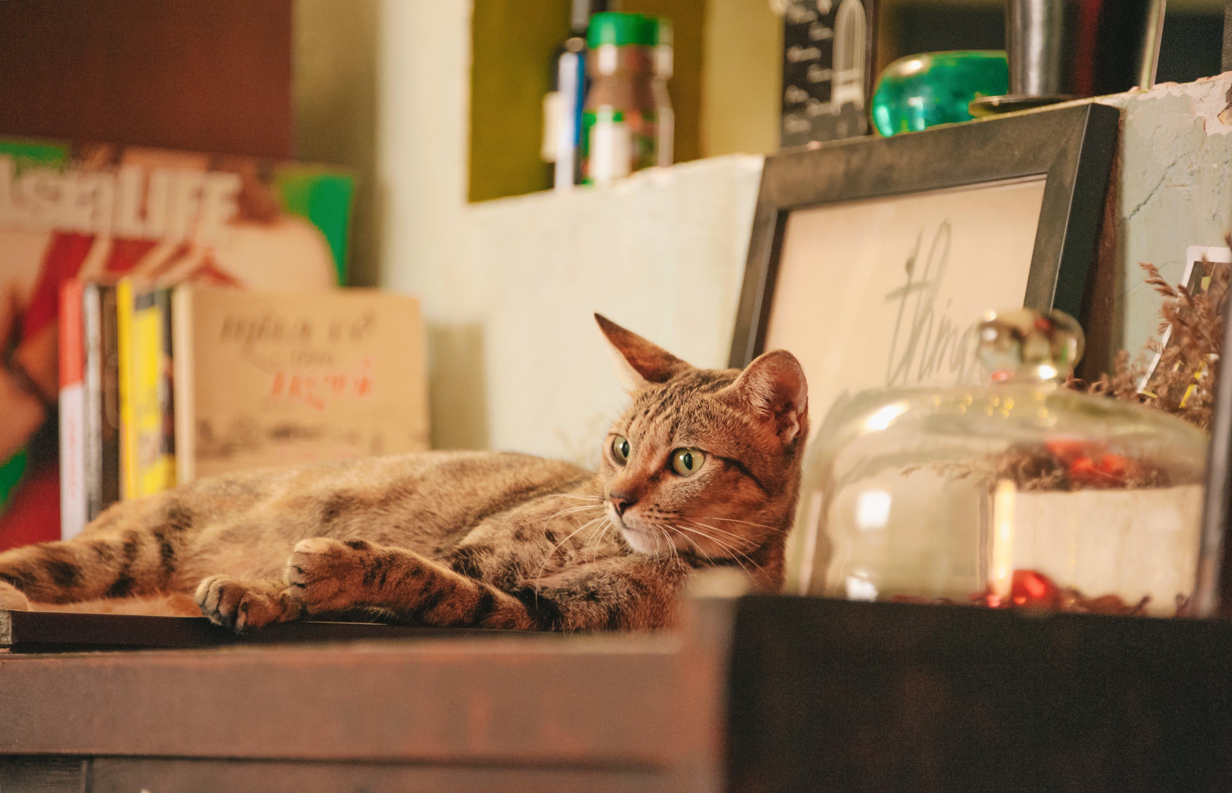 Photo of Orange Tabby Cat on Shelf