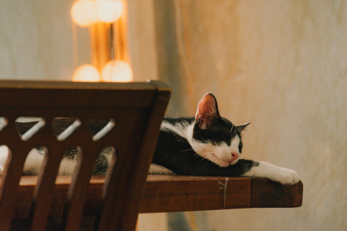 White and Black Cat Lying on Brown Table